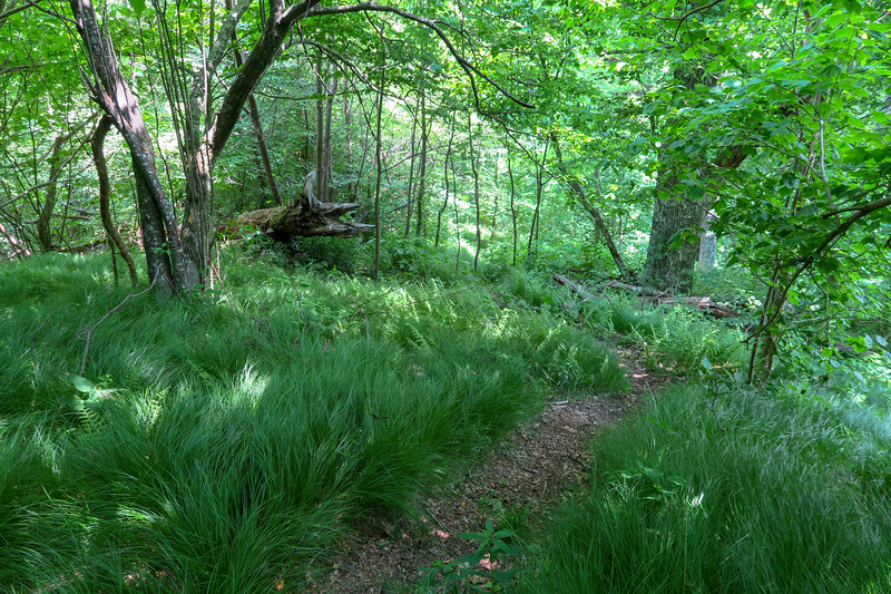 Greasy Cove Trail -- 5,260'