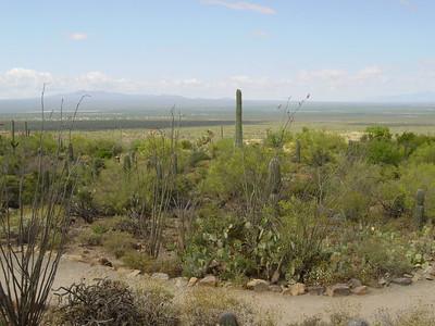 Arizona-Sonora Desert Museum 2005