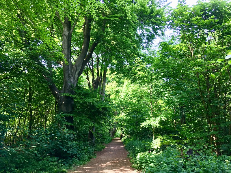 Stanmer woods