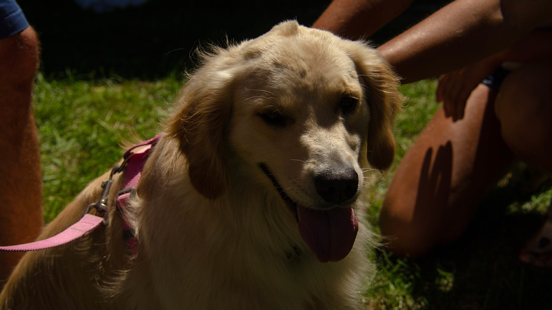 PuppyParty18-307.jpg