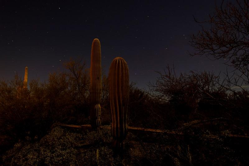 Cactus Glow