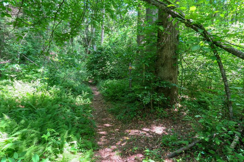 Riverside/Vineyard Gap Trail Junction -- 2,280'