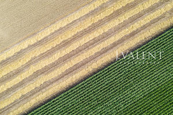 Small Grains - Barley, Canola, Oats & Wheat