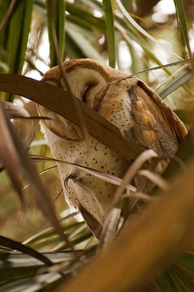 Owl - Barn - Lynn Haven, FL - 02