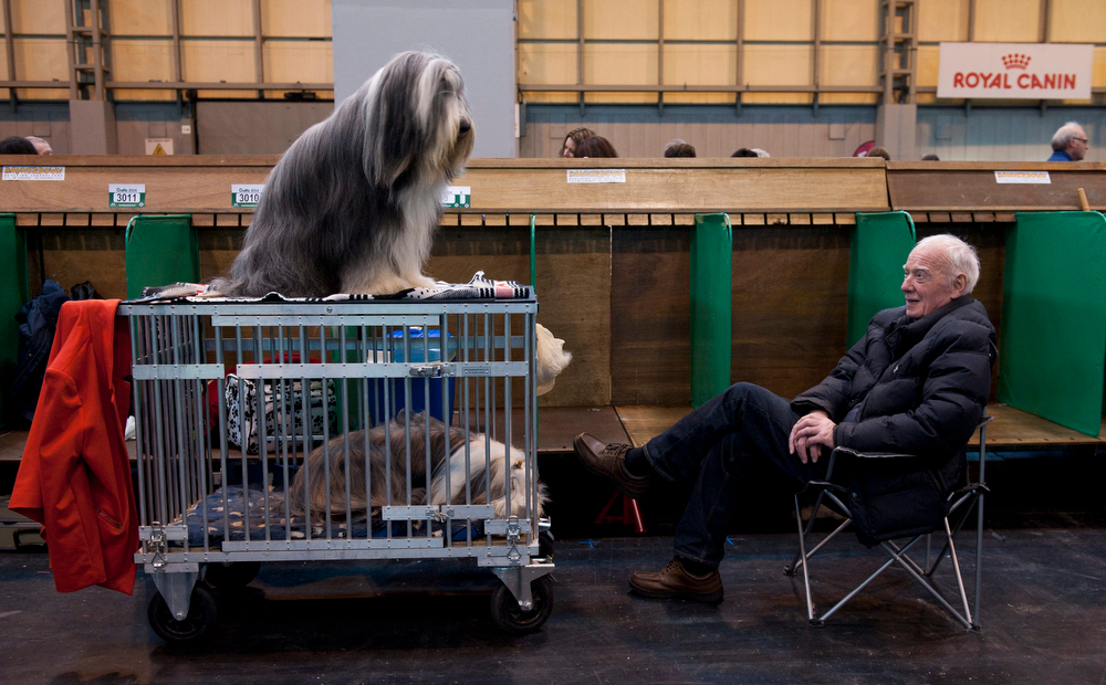 Description of . A man and two Bearded Collies wait to compete at the Crufts Dog Show 2014 at the National Exhibition Centre in Birmingham, Britain, 06 March 2014. This year, Crufts will be held from 06 to 09 March with over 2,650 dogs from 48 different countries competing with 185 different breeds expected to compete in different categories.  (EPA/WILL OLIVER)