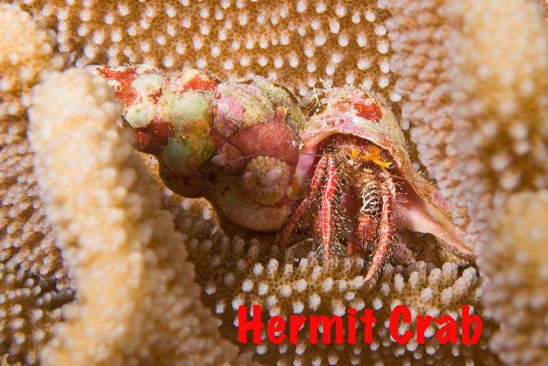Hermit Crab 2.jpg