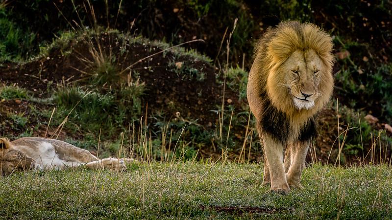 Lions-0133.jpg