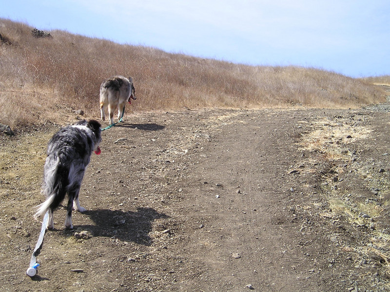 On the steeper parts up and down, I let go of the leashes for my own safety.