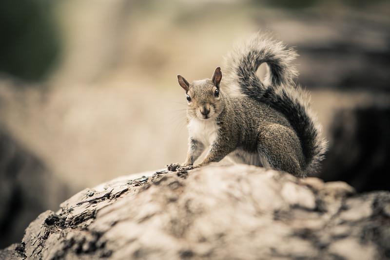 Squirrel-Sunday.jpg
