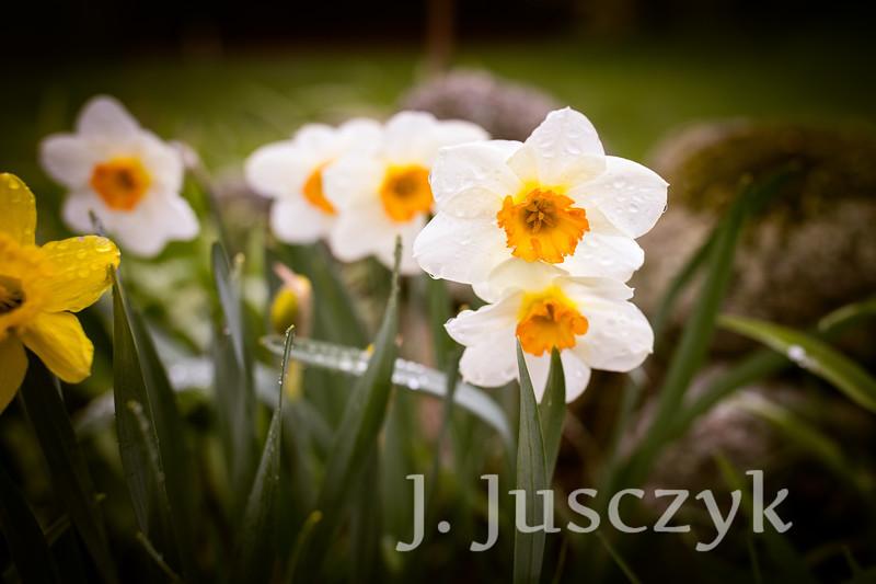 Jusczyk2021-8113.jpg