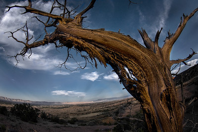 McInnis Canyons