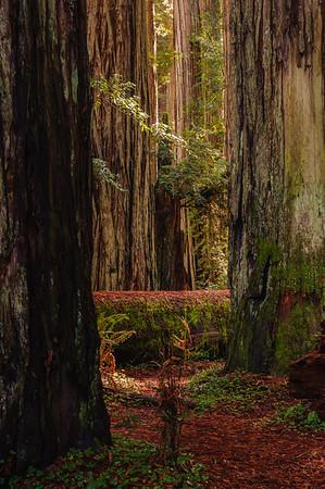 20101108 Redwoods National Park