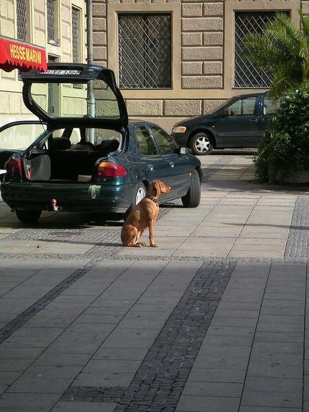 01 Dog.JPG