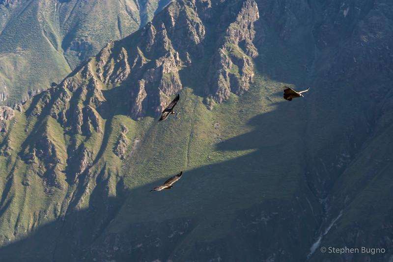 Colca Canyon-1216.jpg