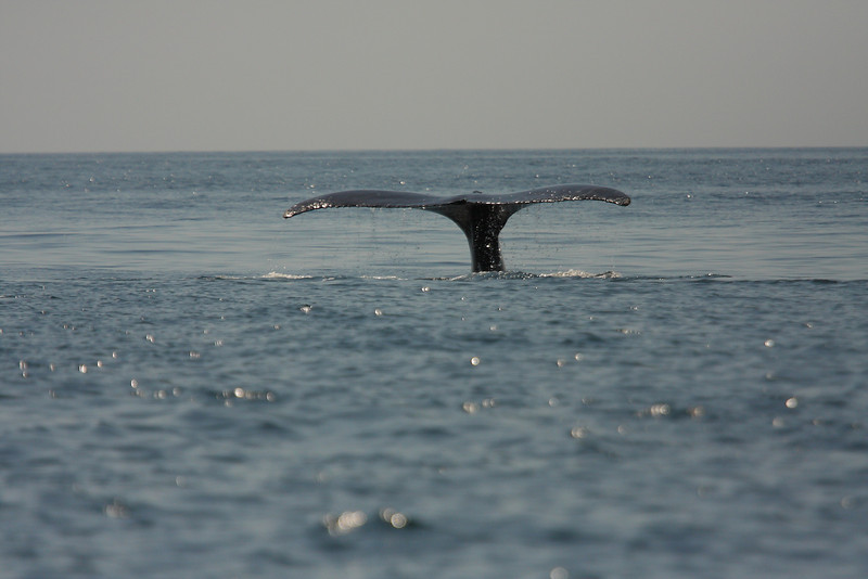 Mexico_Cabo_Whales 11.JPG