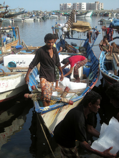 stocking the fishing boat with ice at the morning market in Hodeidah, on the Red Sea