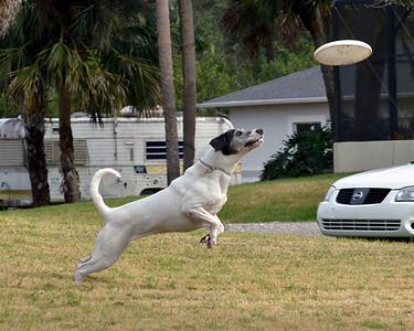 "Boscoe ""The Flying Dog"""