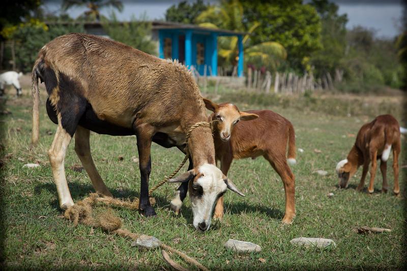 Cuba-Trinidad-IMG_2143.jpg