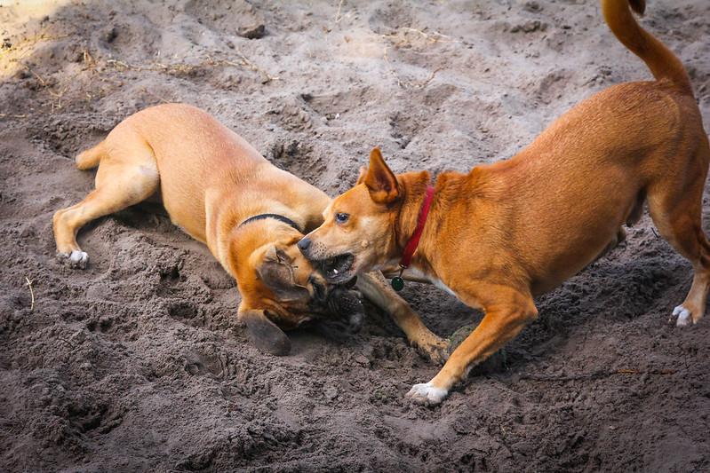 DogPark110313-3442