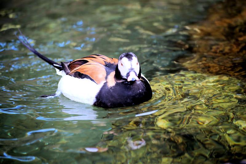 Vivid duck 2.jpg