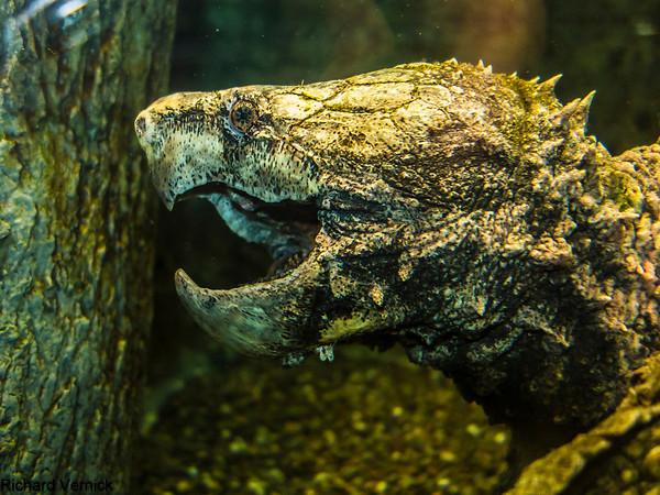 Reptile Museum Williamsport