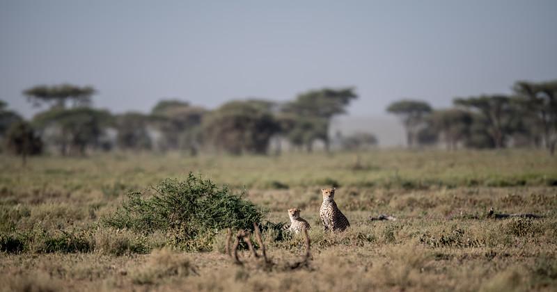 Tanzania_Feb_2018-265.jpg
