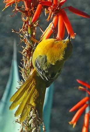 mexico birds 2010