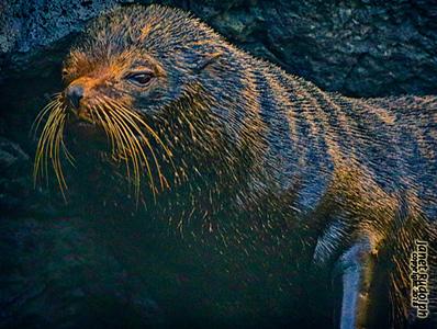 sea lion1S.jpg