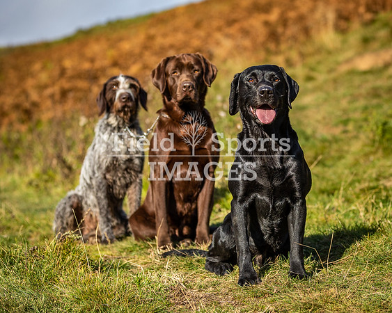 Borders working dogs