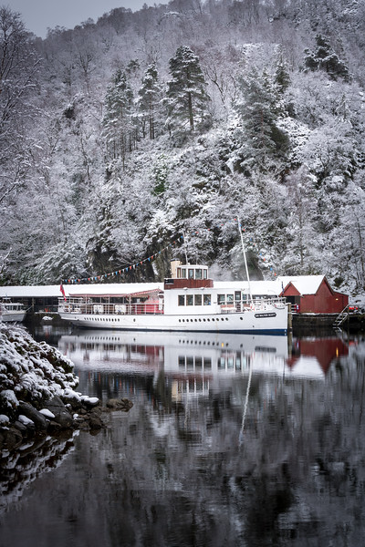 Sir Walter in Winter (P)