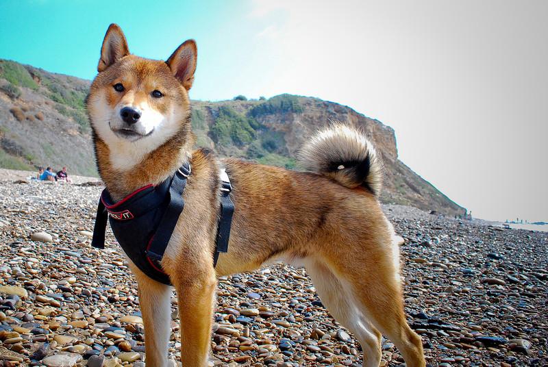 dogs_beach-106.jpg