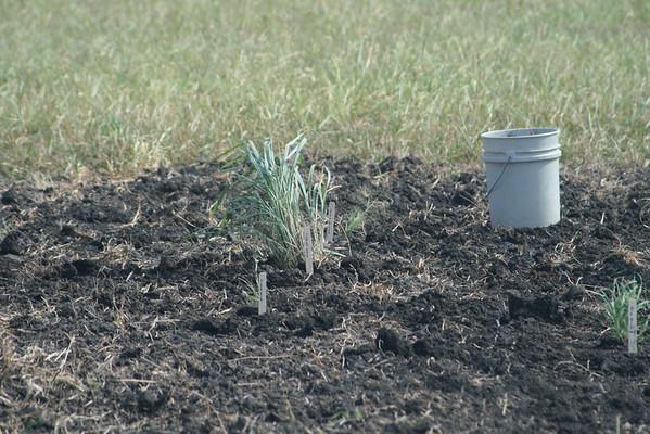 Grass- 2011