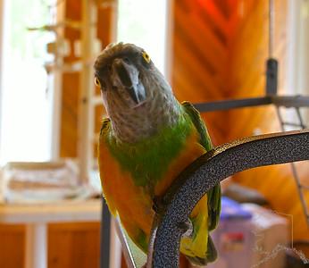 A Friend of Mine's Birds