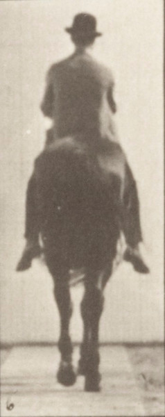 Horse Gazelle walking, spavin, right hind leg with rider