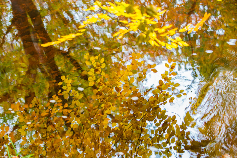 Teign Reflections in Autumn