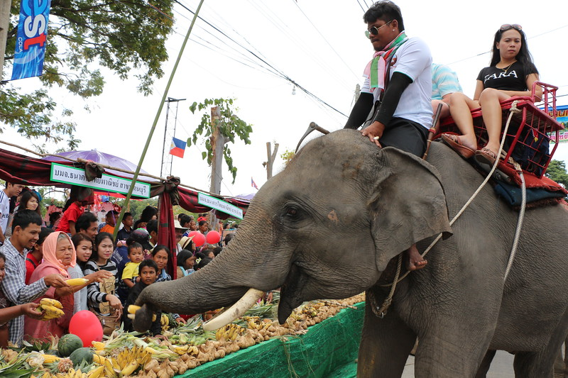 2014-11-14 Surin Elephant Welcome Feast 239.JPG