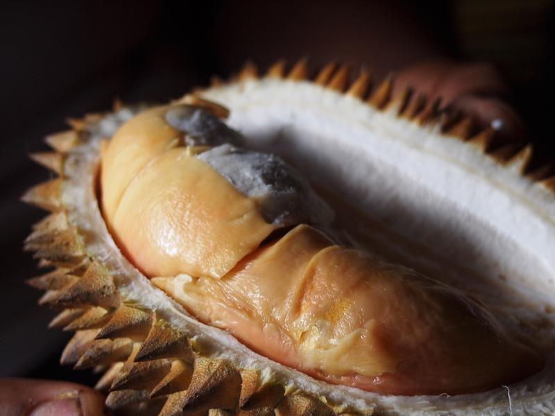 Brown-Durian.jpg