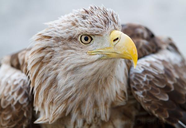 -Birds of prey-