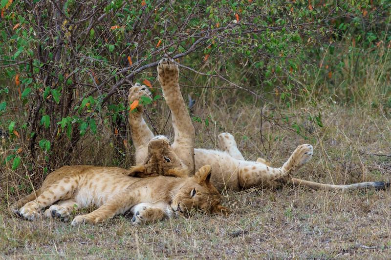 Kenya 2015-10040.jpg