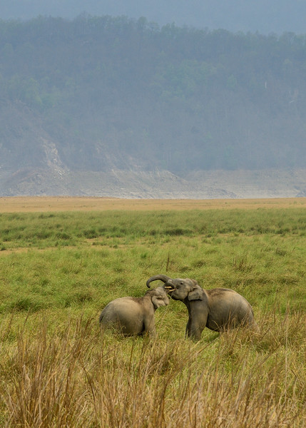 Young-tuskers-sparring-Corbett-Grassland.jpg
