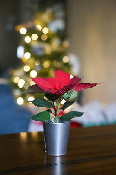 2019-12-22_ChristmasDecor-4400.jpg