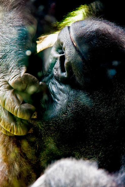 Animals_189.jpg