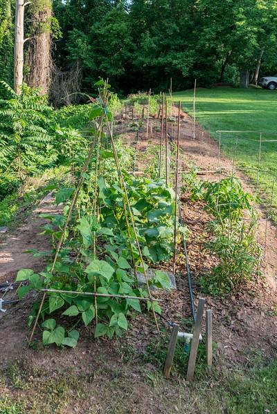 June 13 Farm Chastain-11.jpg