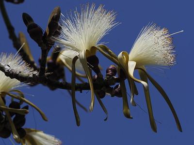 Botanicals, Fauna, Flora, Trees