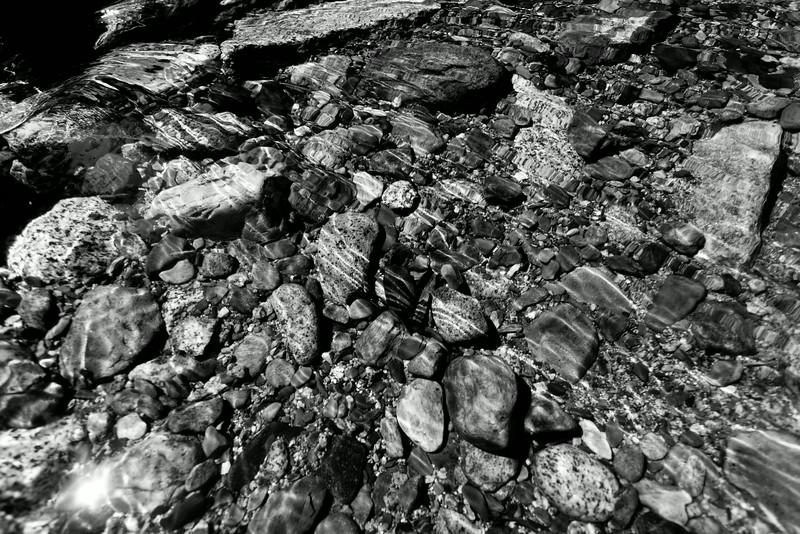 Sequoia_0416.jpg
