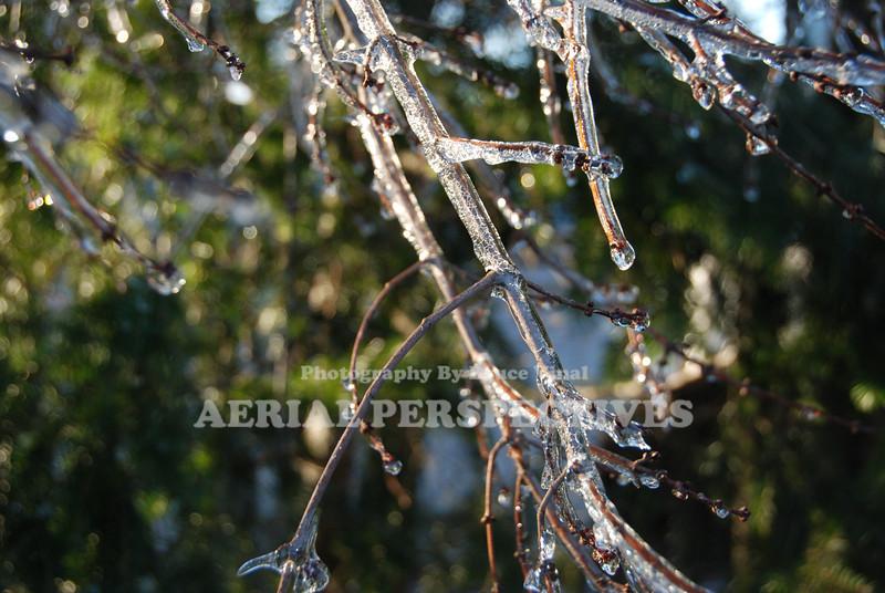 Dec. 2008 New England Ice Storm