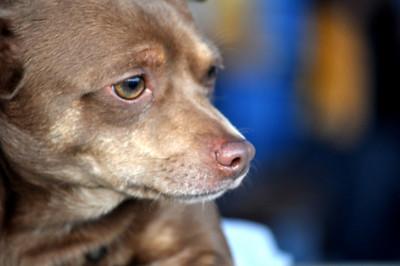 PNC Park Pup Nights