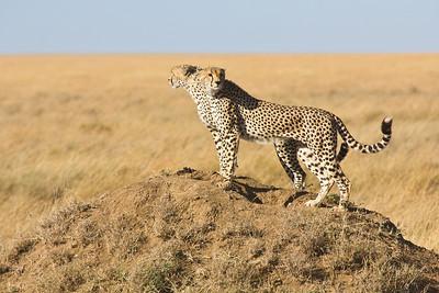 Serengeti National Park 2 (TZ)