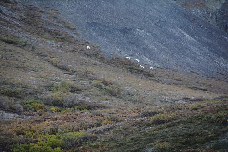 Denali-National-Park-72.jpg