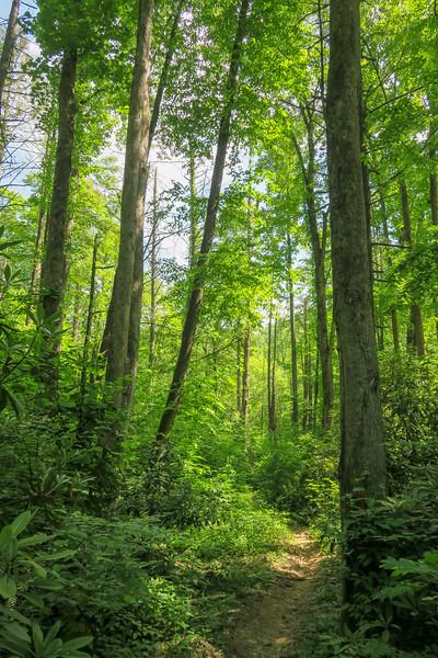 Bradley Creek Trail -- 2,360'